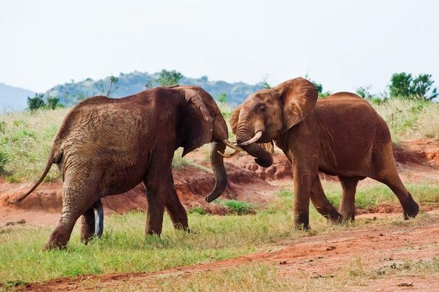 Battaglia di elefanti