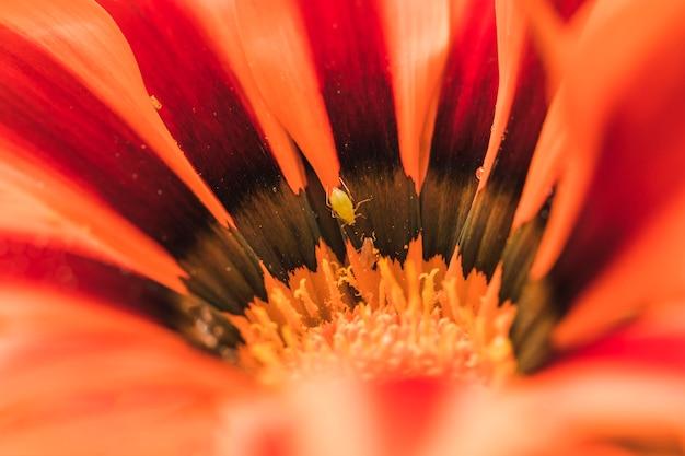 Beetle in meraviglioso fiore esotico arancione