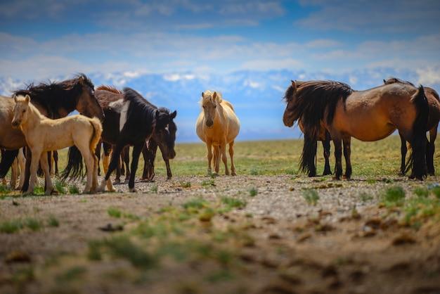 Bei cavalli nel campo su cielo blu