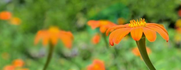 Bei fiori arancioni che fioriscono sul verde