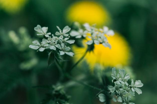 Bei fiori bianchi che fioriscono in file