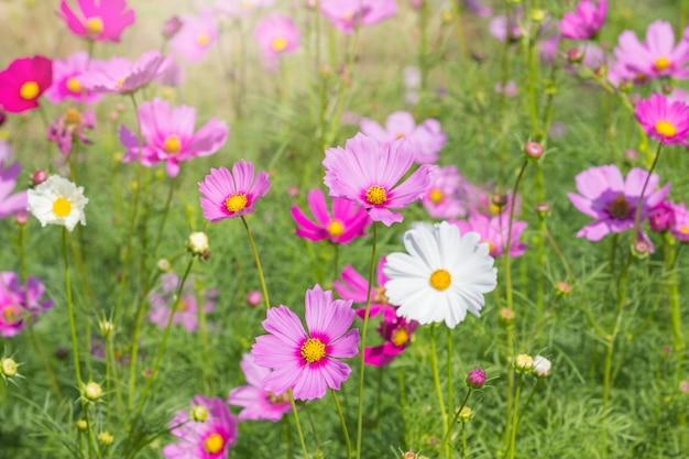 Bei fiori dell'universo nella stagione estiva