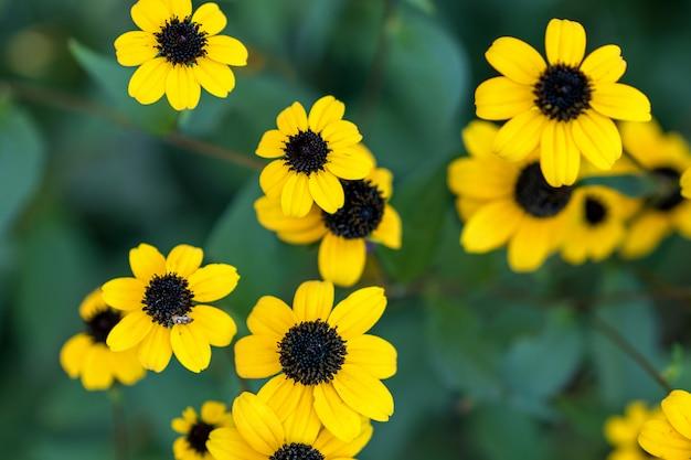 Bei fiori gialli di autunno su sfondo naturale.