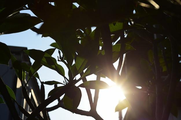 Bei fiori nel giardino accanto alla casa. foglie verdi con bella luce solare utilizzato come immagine di sfondo. fiori colorati con farfalle e insetti. fiori colorati nel parco della città