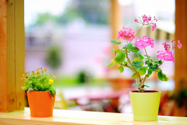 Bei fiori rosa in vaso da fiori che sta nel caffè di aria aperta
