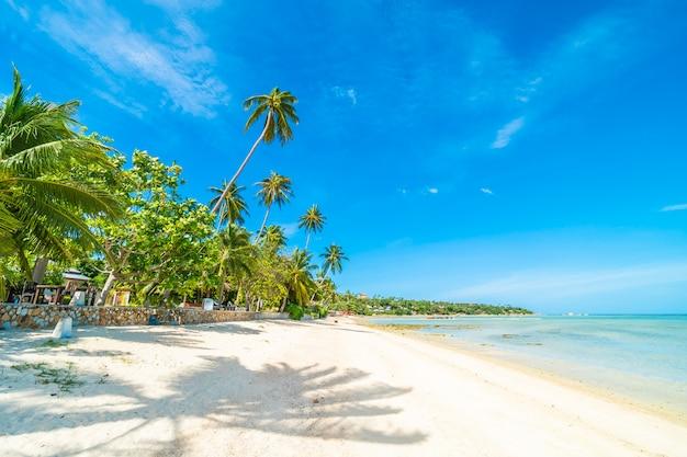 Bei mare e sabbia della spiaggia tropicale con l'albero del cocco su cielo blu e sulla nuvola bianca