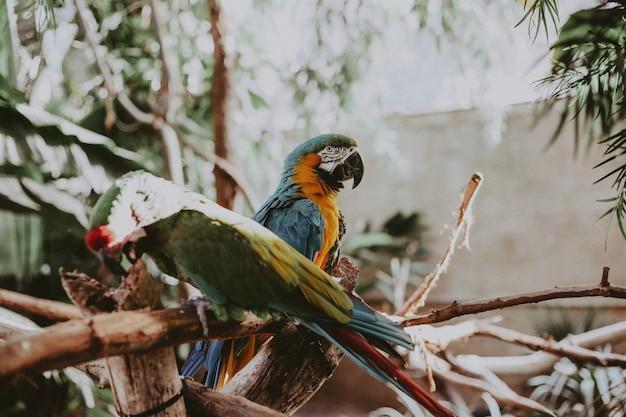 Bei pappagalli variopinti dell'ara sui rami sottili di un albero in un parco