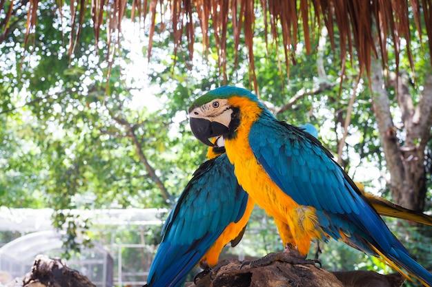 Bei pappagalli variopinti sul vecchio ramo