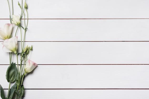 Bei ramoscelli del fiore di eustoma sulla plancia di legno bianca