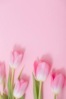Bei tulipani rosa su sfondo rosa