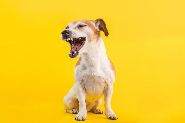 Bel cane con la bocca aperta urla