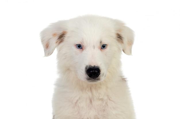 Bel cucciolo con i capelli castani e bianchi