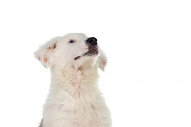 Bel cucciolo guardando in alto