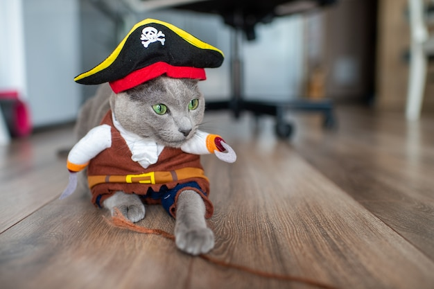 Bel gattino in costume da pirata.