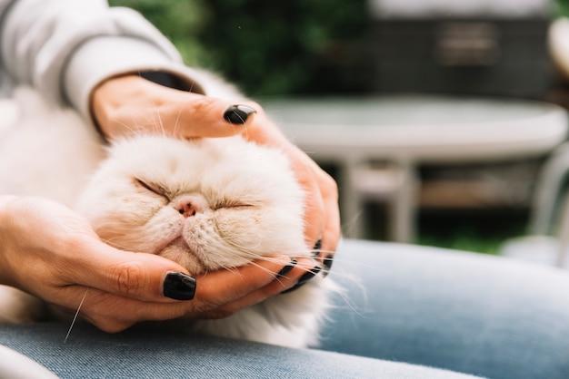 Bel gatto bianco a casa