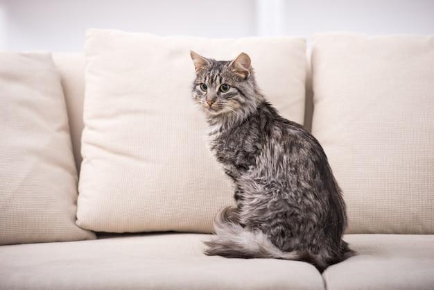 Bel gatto è seduto su un divano.