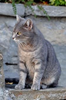 Bel gatto grigio guardando lateralmente