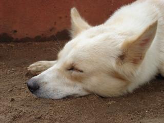 Bella addormentata, carino