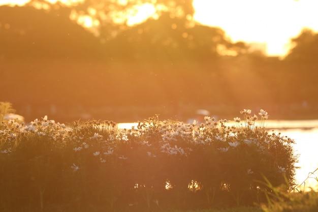 Bella alba al parco vicino al lago e il cielo del mattino in autunno sfondo di colore dorato