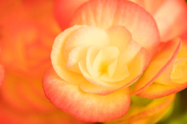 Bella brillante fioritura fresca