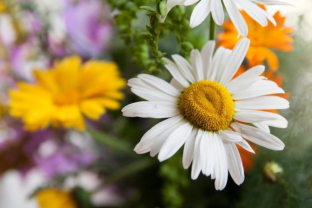 Bella camomilla su una superficie di fiori selvatici ed erbe