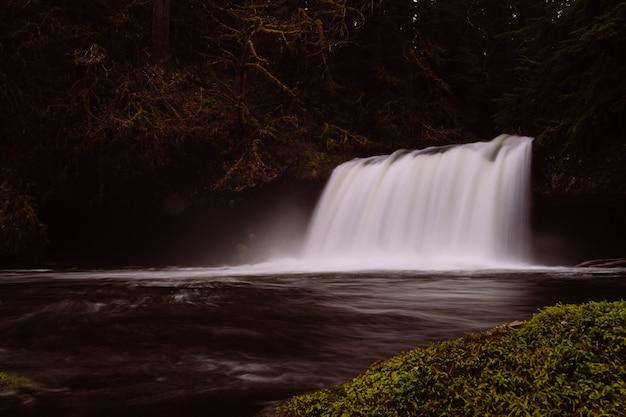 Bella cascata bianca pura nella foresta