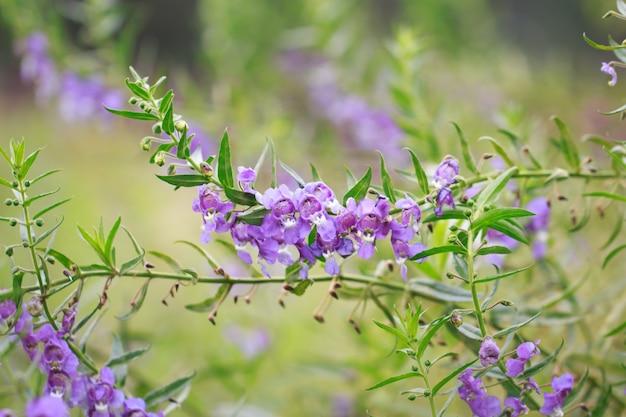 Bella di fiori viola nel giardino