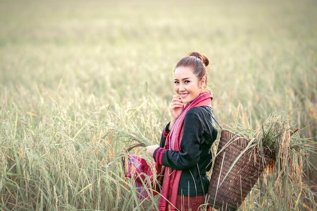 Bella donna, coltivatore tailandese che raccoglie le risaie
