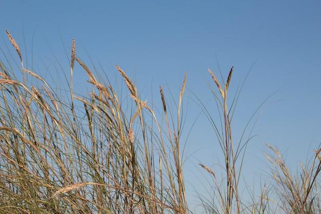 Bella erba contro il cielo