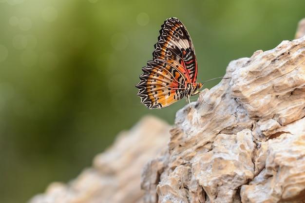 Bella farfalla arancia sulla roccia e sfondo verde bokeh