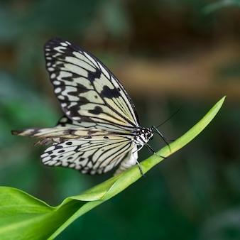 Bella farfalla in habitat naturale
