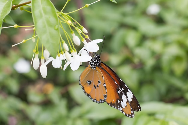 Bella farfalla selezionare messa a fuoco