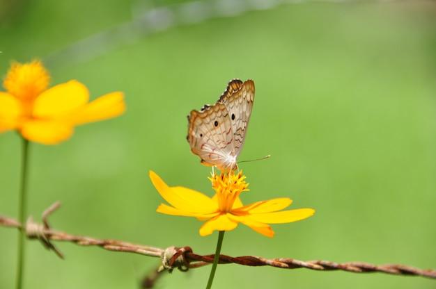 Bella farfalla su un fiore giallo in una giornata estiva greenfield