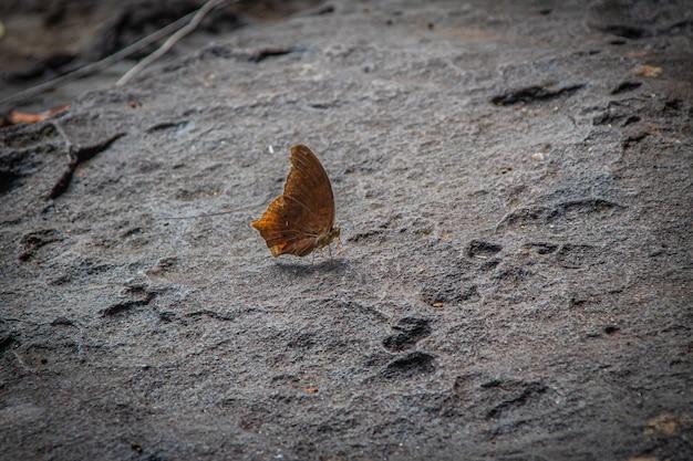 Bella farfalla sulla pietra della cascata in natura, insetto farfalla colorata in natura.