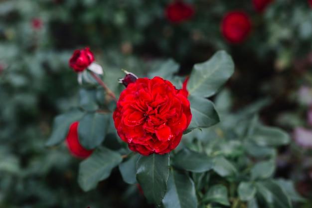 Bella floricultura rossa nel giardino botanico