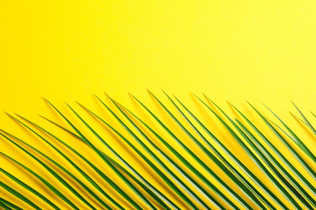 Bella foglia di palma sul fondo di colore, sulla vista superiore e sullo spazio per testo. pianta esotica