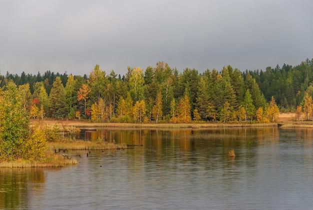 Bella foresta d'autunno