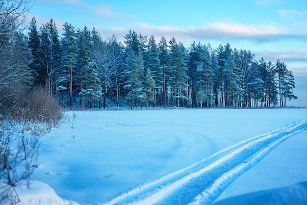 Bella foresta d'inverno la sera.
