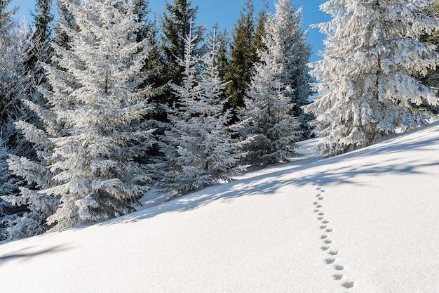 Bella foresta invernale con alberi innevati in una luminosa giornata di sole, paesaggio