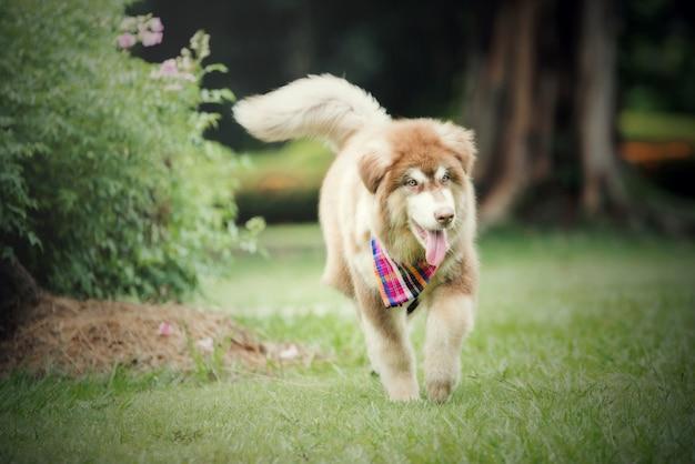 Bella giovane donna che funziona con il suo cagnolino in un parco all'aperto. ritratto di stile di vita.
