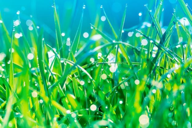 Bella immagine artistica di erba verde con la mattina in anticipo della molla delle goccioline di acqua di rugiada alla luce solare
