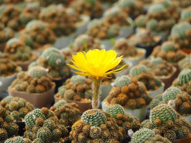 Bella immagine di cactus