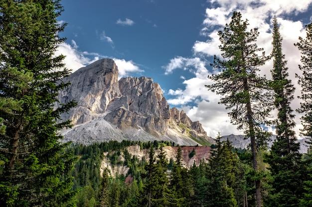 Bella montagna bianca con foresta di alberi sempreverdi
