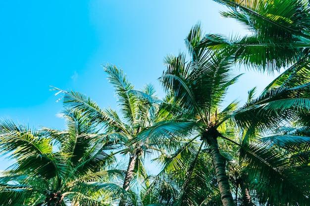Bella natura all'aperto con palme da cocco e foglie su cielo blu