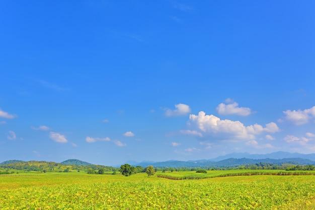 Bella nuvola su cielo blu in campo verde e montagne. sfondo paesaggio paesaggio.