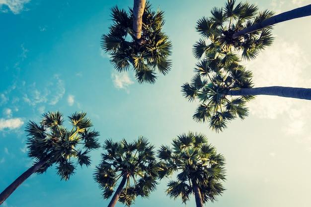 Bella palma su cielo blu