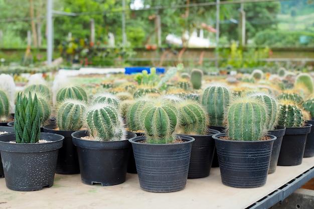 Bella pianta di cactus verde in vaso di fiori