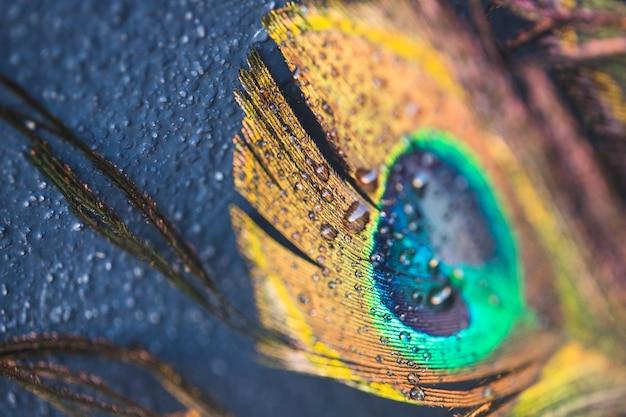 Bella piuma di pavone esotico su sfondo nero