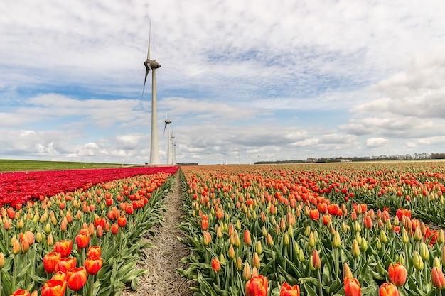 Bella ripresa di diversi tipi di un campo di fiori con mulini a vento in lontananza