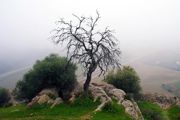 Bella ripresa di un albero nudo con colline nebbiose